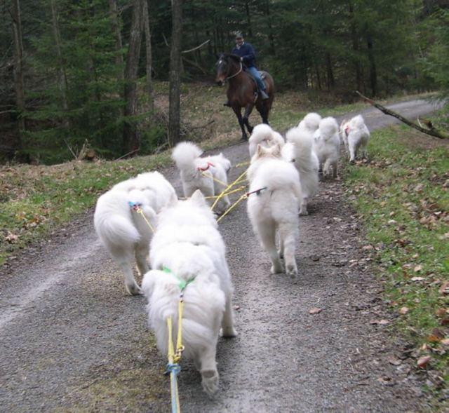 neunergespann-pferdebegegnung